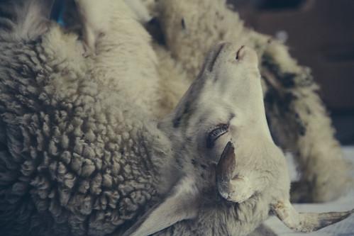 arrematações do gado