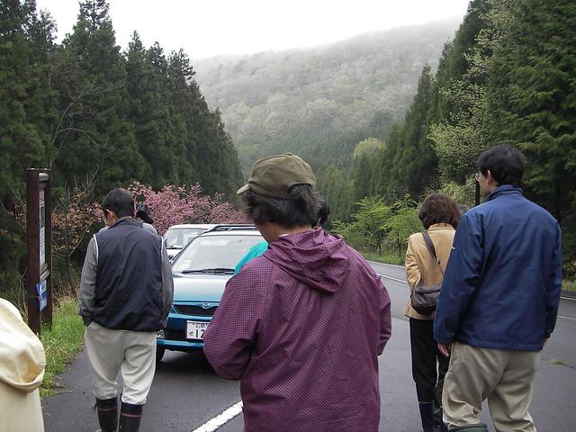 自生地への道は,八重桜のつぼみが膨らんでいた.