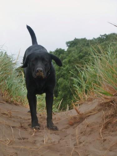 Tuck running down dunes