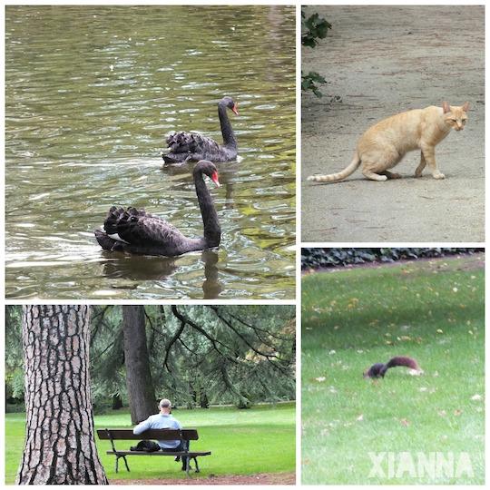 Animals in parque del capricho, Madrid