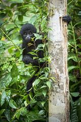 animal, shrub, leaf, primate, flora, green, fauna, forest, jungle, wildlife,
