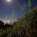 LaPalma - Tijarafe - MoonSea / Lighting with Led Lenser X21R by JanLeonardo - Light Painting Artist