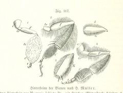 Image taken from page 826 of 'Unser Wissen von der Erde. Allgemeine Erdkunde und Länderkunde, herausgegeben unter fachmännischer Mitwirkung von A. Kirchhoff'
