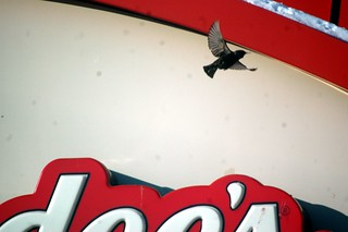 A bird takes flight in Beech Grove, Indiana.