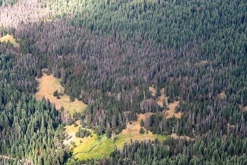 Mountain Pine Beetle Usda Mountain Pine Beetle Has