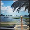 Lake, sun, iced coffee, ducks, boats and palm trees. #summer