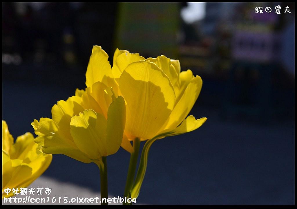 中社觀光花市DSC_1736