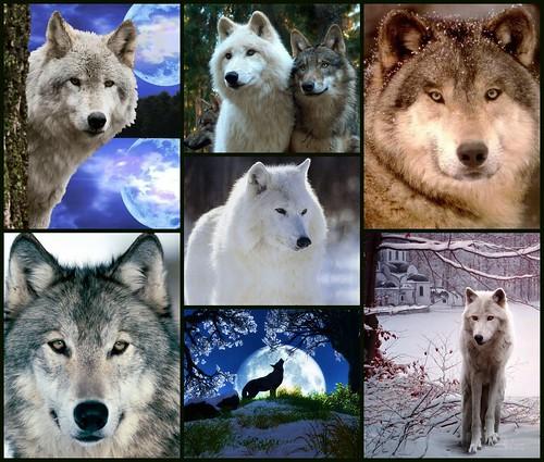Picwolf