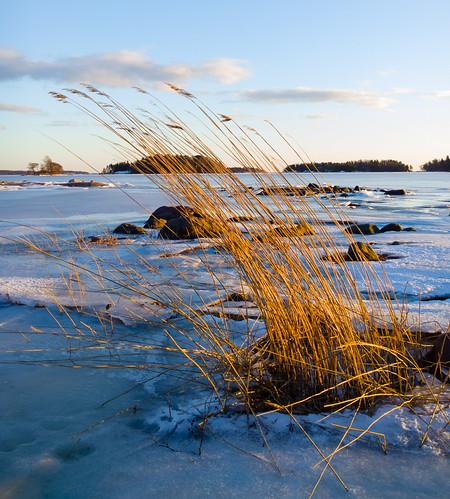 windows winter sunset sun ice reed mobile espoo finland nokia sundown rush talvi 1020 bulrush jää auringonlasku carlzeiss aurinko uusimaa lumia kaisla hanasaari phoneography pureview lumiagraphy lumia1020