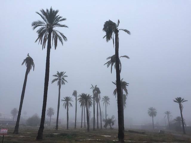 Fog in Phoenix