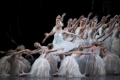Roberta Marquez as Odette and members of the corps de ballet in Swan Lake, The Royal Ballet