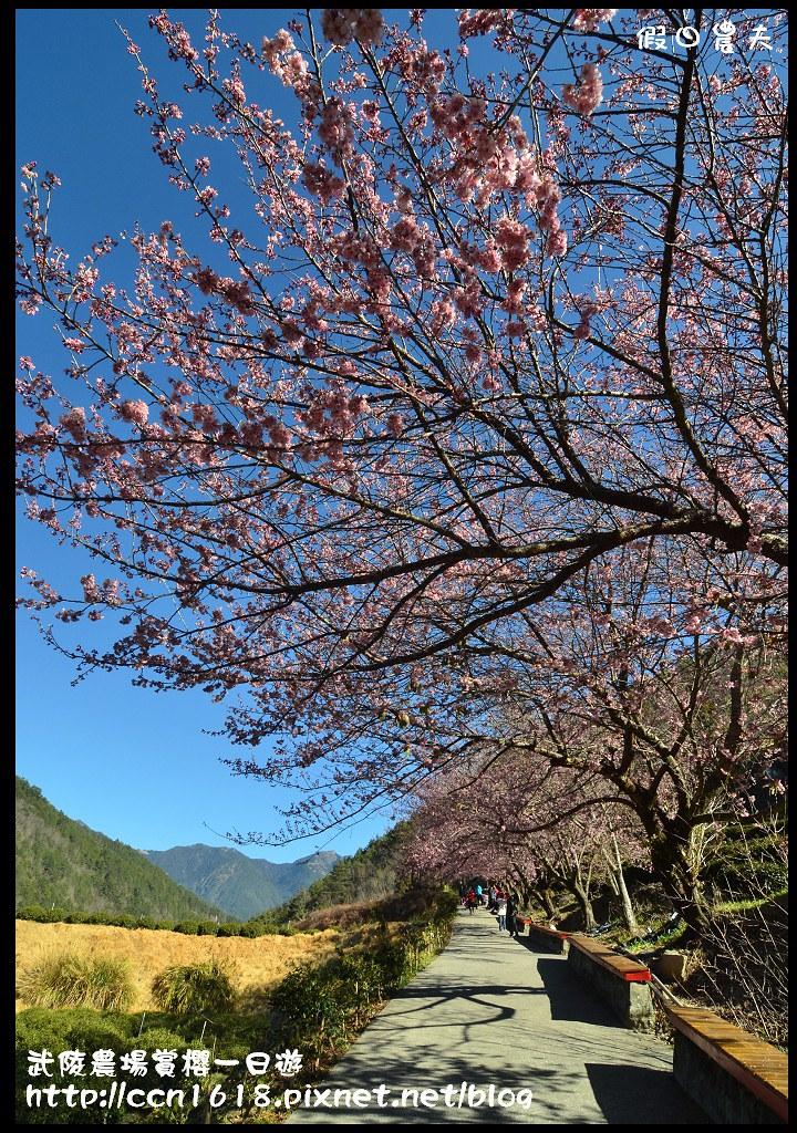 武陵農場賞櫻一日遊DSC_5552