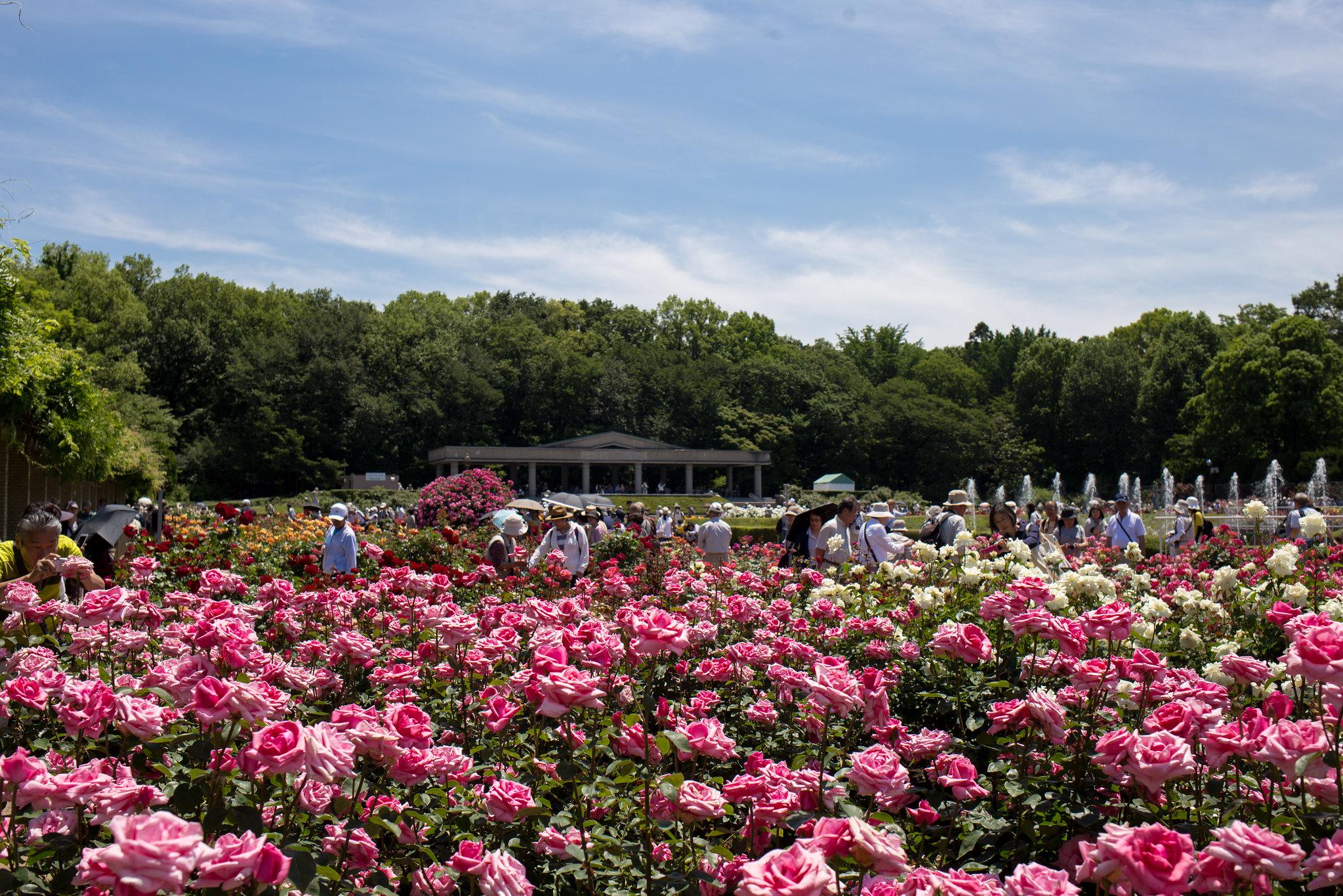 2016-05-18 神代植物公園 001-17