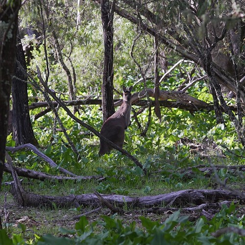 Do you ever walk through the forest and get the feeling you are being watched?