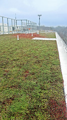 Wheaton-High-School-Silver-Spring-Maryland-Living-Roof-by-LiveRoof