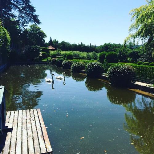 Estanque de los cisnes #Parador #Portugal