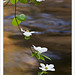 Dogwood Branch, Whirlpool