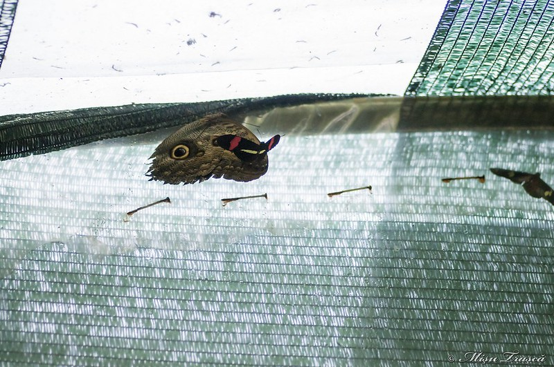 fluture pe fluture