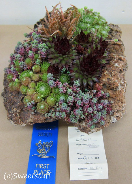 First place planted pumice Alex Rigg