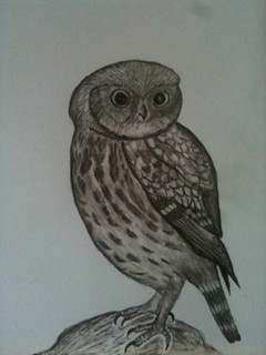 Charcoal Little owl- Online Studio