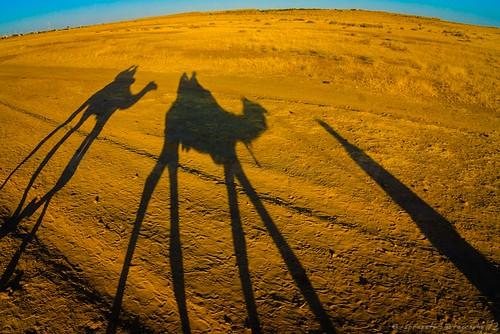 A ride through the golden sands ...