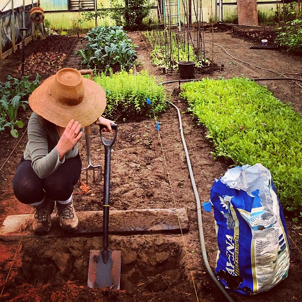 Double dig it! #gardening good morning.