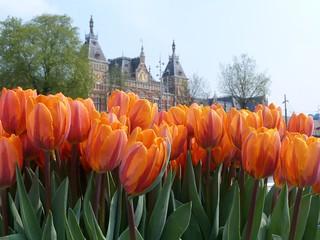 Tulipanes frente a la Estación central de Amsterdam