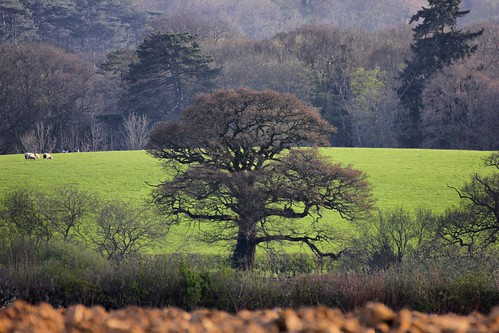Trees, West Sussex, GB