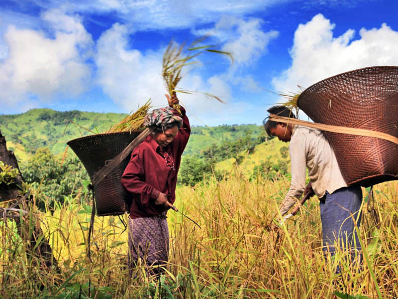 2013調查顯示,中國生物多樣性意識高漲,圖為中國的山區農業。圖片來源:GEF on Flickr,符合CC授權使用。網址:https://secure.flickr.com/photos/thegef/5955070357/