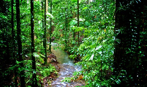 世界上最古老的雨林丹吹雨林(Daintree Rainforest )。攝影:Paul D'Ambra。CC BY-NC-ND 2.0