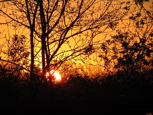 morning red orange sunrise early silhouettes silhouettedtrees fierysunrise