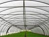 Greenhouse Tunnel by Batikart... off !!!
