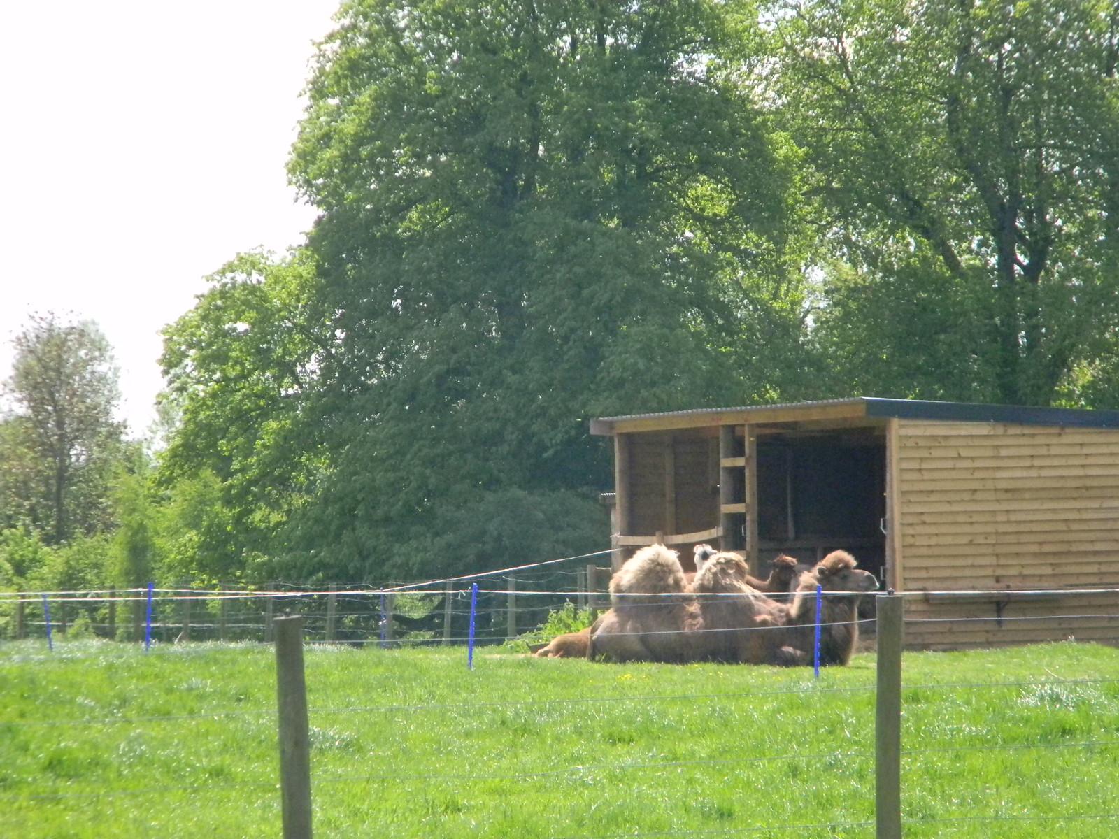 Camel Salisbury to Amesbury via Stonehenge