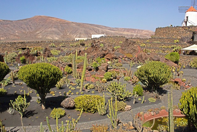 hdr of jardin de cactus lanzarote flickr photo sharing. Black Bedroom Furniture Sets. Home Design Ideas