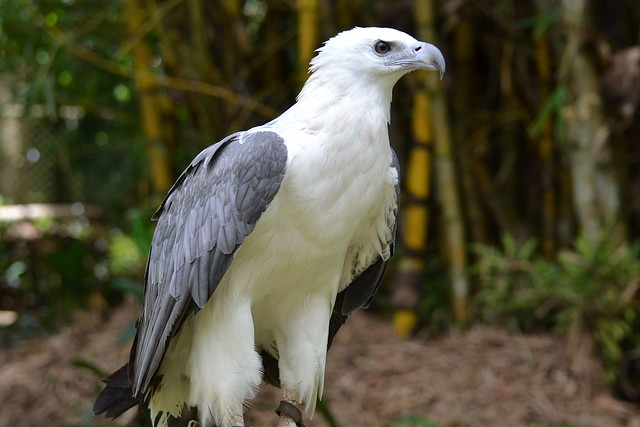 Photo point- white bellied sea eagle