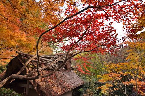 【写真】2012 紅葉 : 厭離庵/2020-10-15/IMGP7841