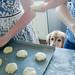 Tobey loves shortcake by Brady the Golden Retriever