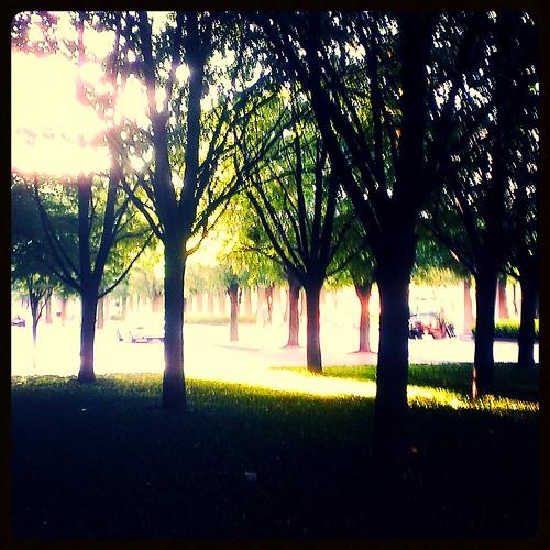 P&G Gardens