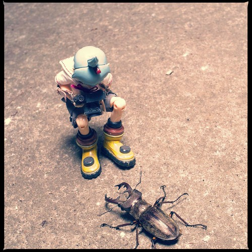 Stag beetle VS SIGURE