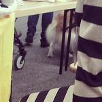 Fuzzy doggie tail behind Ainur