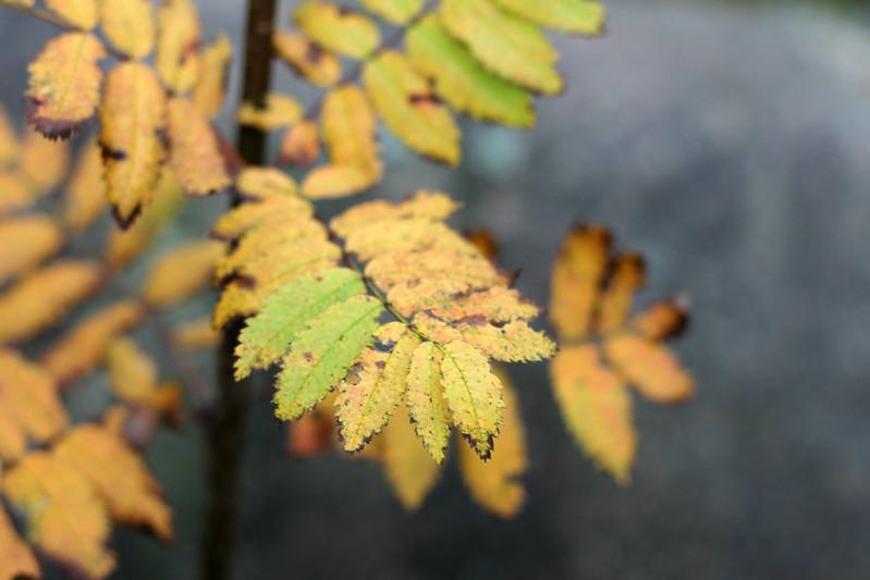 leafleaf