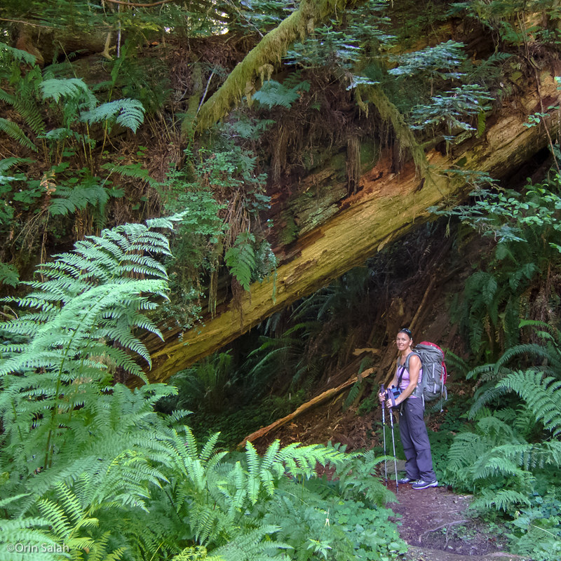 06Jul2013_redwoods-2651