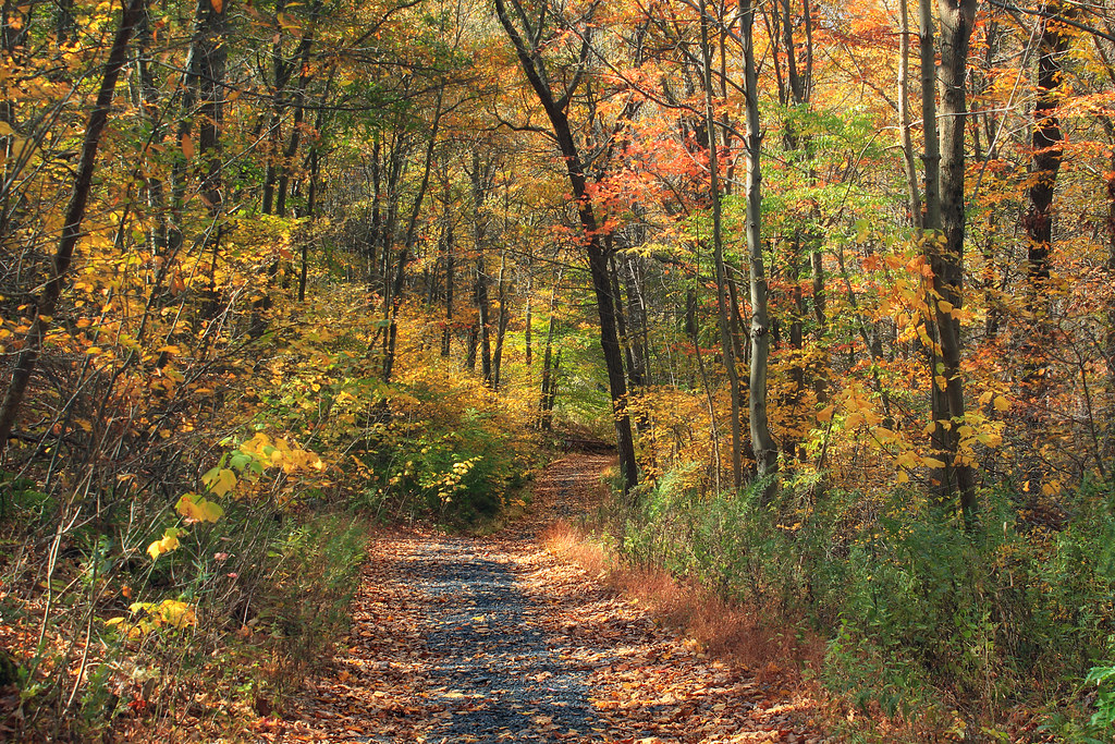 Appalachian Trail: Totts Gap to Mount Minsi (2)