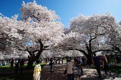 Seattle Spring 2013