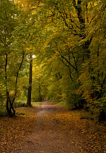 wood autumn trees green canon canonfd sherrards gor44 canon2885mmfd