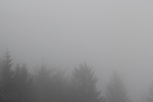 November greys