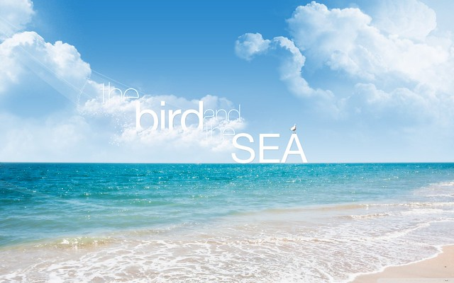 the bird and the sea wallpaper
