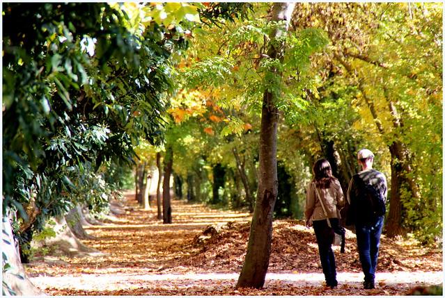 Oto o en los jardines del pr ncipe de aranjuez flickr for Jardines en otono