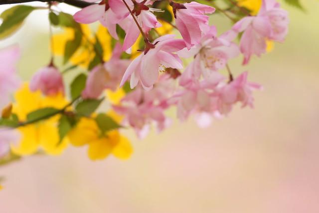 春色の想い2
