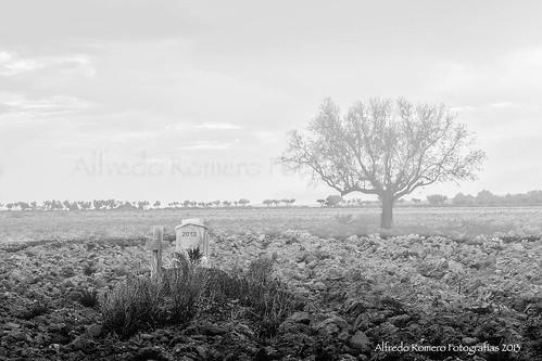 Adios 2013 by Alfredo Romero Fotografias 